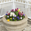 Stone planter with spring flowers — Stock Photo
