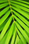 Palm tree leaves — Stock Photo