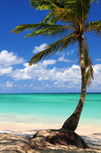 Beach of a tropical island — Stock Photo
