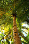 Palm tree canopies in tropical forest — Stock Photo