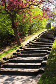 Wooden stairway in a park — Stock Photo