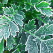 Frosty plants in late fall — Stock Photo #4642016