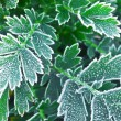 Frosty plants in late fall - Stock Photo