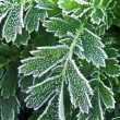 Frosty plants in late fall — Stock Photo #4642020