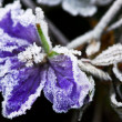 Foto Stock: Frosty flower in late fall
