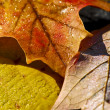 Autumn leaves macro — Stock Photo