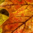 Autumn leaves macro — ストック写真