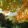 Autumn trees in fall park — Stock Photo