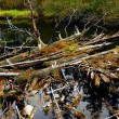 Stock Photo: Driftwood in river