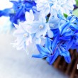 First spring flowers — Stockfoto