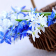 Stock Photo: First spring flowers
