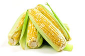 Corn ears on white background — Stock Photo