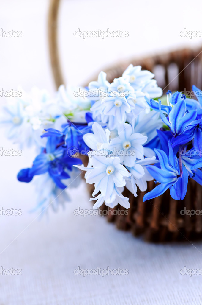 Blue bouquet of first spring flowers in a basket closeup — Stock Photo #4642399