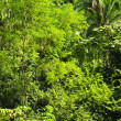 Tropical jungle background - Stock Photo
