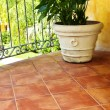 Plant on tiled Mexican veranda — Stock Photo #4719513