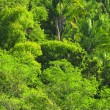Tropical jungle background — Stock Photo #4719521