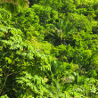 Tropical jungle background — Stock Photo