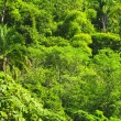 Tropical jungle background - Stockfoto