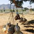 Calabash gourd bottles in Mexico - Stock Photo