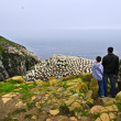 Family visiting Cape St. Mary's Ecological Bird Sanctuary in Newfoundl — Stock Photo #4719734