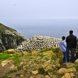 Family visiting Cape St. Mary's Ecological Bird Sanctuary in Newfoundl - Stock Photo