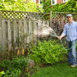 Stock Photo: Man watering garden