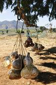 Kalebass kalebass flaskor i mexiko — Stockfoto