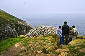 Family visiting Cape St. Mary's Ecological Bird Sanctuary in Newfoundl — Stock Photo