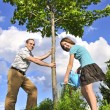 Planting a tree — Stock Photo #4720097