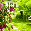 Home and garden — Stockfoto