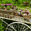 Flower cart in garden — Stock Photo