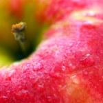 红苹果 — 图库照片