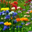 Stockfoto: Flower background