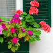 House flower box — Stock Photo