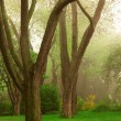 Foggy park — Stock Photo #4824376