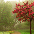 Foggy park — Stock Photo
