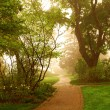 Stock Photo: Foggy park
