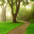 Foggy park — Stock Photo #4824385