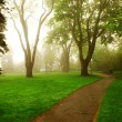 Foggy park - Photo