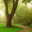 Foggy park - Stock Photo