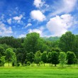 Green forest — Stock Photo #4824391