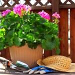 Gardening tools — Stock Photo #4824431