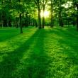 Green park — Stock Photo