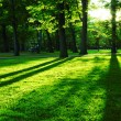 Green park — Stock Photo #4824455
