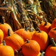 Pumpkins — Stock Photo #4824470
