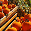 Pumpkins — Stock Photo #4824471