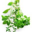 Stock Photo: Assorted herbs