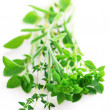 Assorted herbs — Stock Photo #4824476