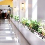 Hospital corridor — Stock Photo #4824481
