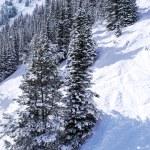 Постер, плакат: Ski tracks in mountains